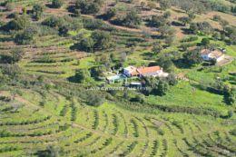 Grosses Anwesen mit verschiedensten Baumsorten