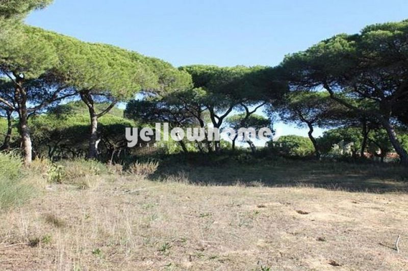 Plot for construction in pine forest 500 meters from the beach